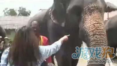 人在囧途之泰囧:香蕉还在iPhone被大象吃了1