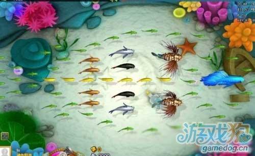 捕鱼假日海岛场景及鱼种详细介绍