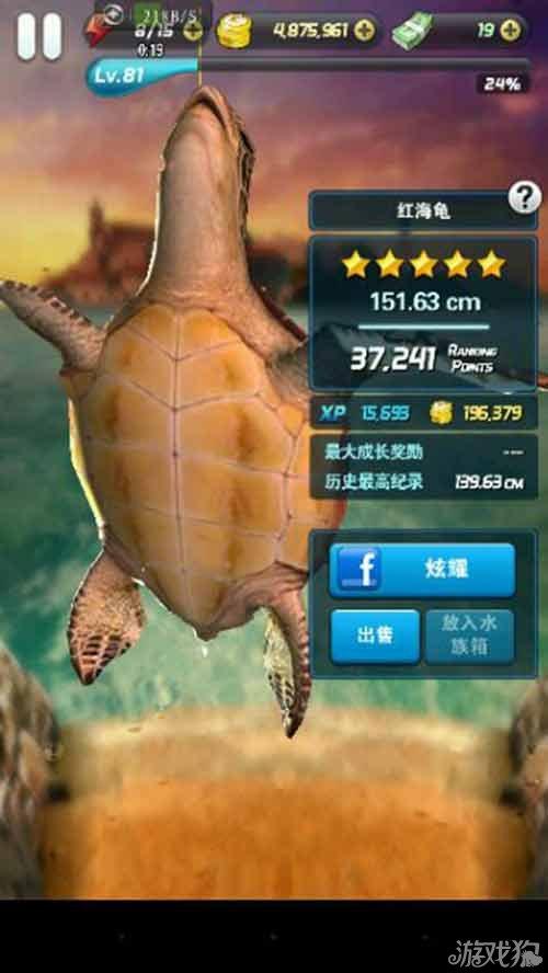大海龟简笔画步骤
