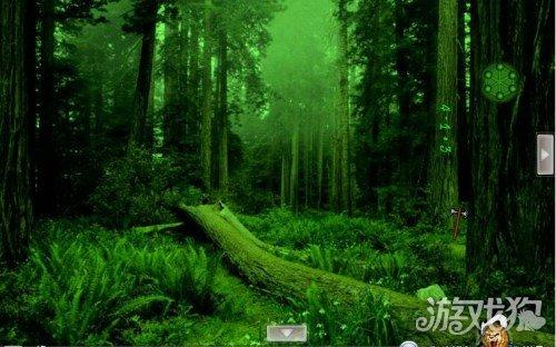 逃离野生动物森林攻略通关注意要点全面解读